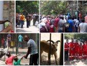 حديقة الحيوان - أرشيفية
