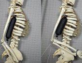 عضلة صناعية