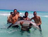 الشباب يلتقط الصور مع الدولفين