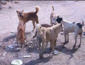 كلاب ضالة -أرشيفية