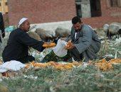 محصول الذرة الشامية