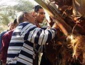 سبل مكافحة الآفات الزراعية لحدائق النخيل