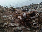 القمامة والمخلفات تحاصر نهر النيل فرع دمياط