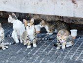 أضرار التعامل مع قطط الشوارع