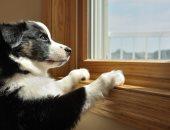 أمراض تنتقل من الكلب للإنسان - صورة أرشيفية
