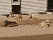 انتشار الكلاب الضالة وعربات الفول فى الحى السابع بمدينة نصر