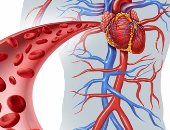 الاوعية الدموية-صورة ارشيفية