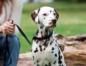 قانون برتغالى يسمح بتواجد الكلاب فى الأماكن العامة - أرشيفية