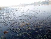 جانب من تلوث المياه