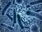 بكتيريا - أرشيفية