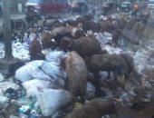 القمامة بشارع أحمد عرابى بشبرا الخيمة
