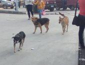 جانب من الكلاب الضالة