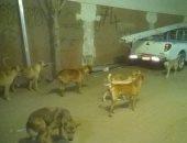 الكلاب فى شوارع أرض اللواء