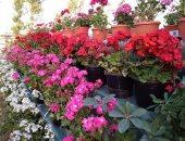 زهور - أرشيفية