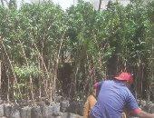 زراعة شاتلات
