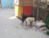 الكلاب فى شوارع المنطقة