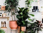 تنسيق نباتات الزينة