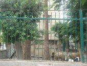 الأغنام داخل حديقة مسجد النجدى بأبو كبير بالشرقية