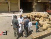 شوادر الأضاحى بشوارع الإسكندرية