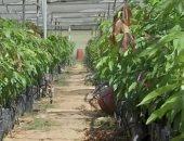 زراعة - صورة أرشيفية