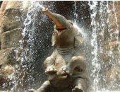 صورة لفيل يضحك