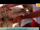 برنامج صباح الخير يا مصر