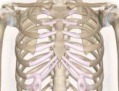القفص الصدرى -ارشيفية
