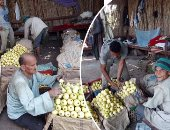 محصول الجوافة