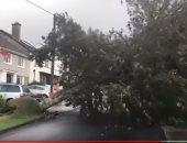 عاصفة تقتلع الأشجار