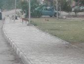 الكلاب الضالة بالمجاورة 3 بـ6 أكتوبر