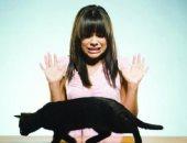 الخوف من القطط- ارشيفية