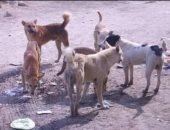 كلاب ضاله - أرشيفية