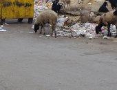 القمامة بمحيط المدرسة