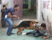 تربية الكلاب فى المناطق الشعبية