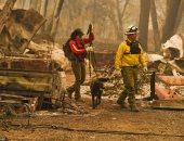 فرق الإنقاذ تخرج كلبا من وسط الحطام