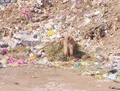 القمامة بجوار مركز شباب نجع النجار