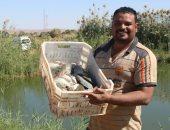 المزارع السمكية فى قرى الخريجين بأسوان