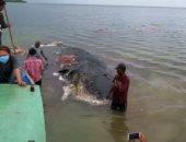 الحوت النافق
