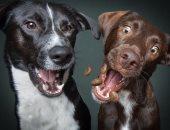 الكلاب خلال التصوير