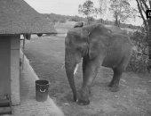 الفيل يحاول وضع القمامة فى سلة المهملات