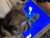 مقلب فى قطة