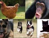 أغنى حيوانات في العالم