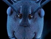 صورة مكبرة لرأس نملة