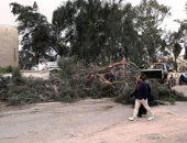 سقوط شجرة - صورة أرشيفية