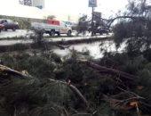 سقوط شجرة