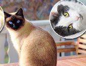 قطط -صورة ارشيفية