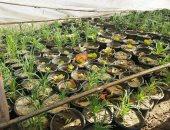 الزراعة تنظم دورة لمكافحة امراض المحاصيل الحقلية
