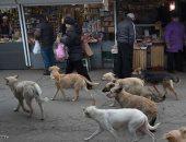 كلاب ضالة - أرشيفية