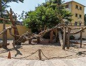 شجرة العذراء مريم بالمطرية