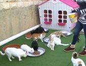 اثناء تقديم الطعام الى القطط